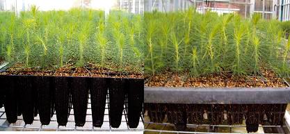 Contenedores para plantas vivero transportes de paneles for Preparacion de sustrato para viveros forestales