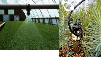 Control de calidad de planta forestal servicio regional for Construccion de viveros forestales