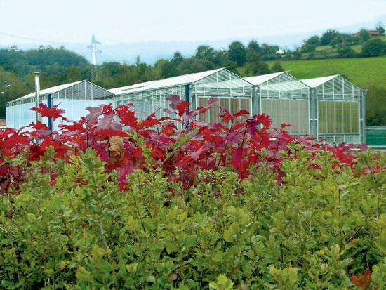 Gesti n del cultivo de planta forestal en contenedor con for Tipos de plantas forestales